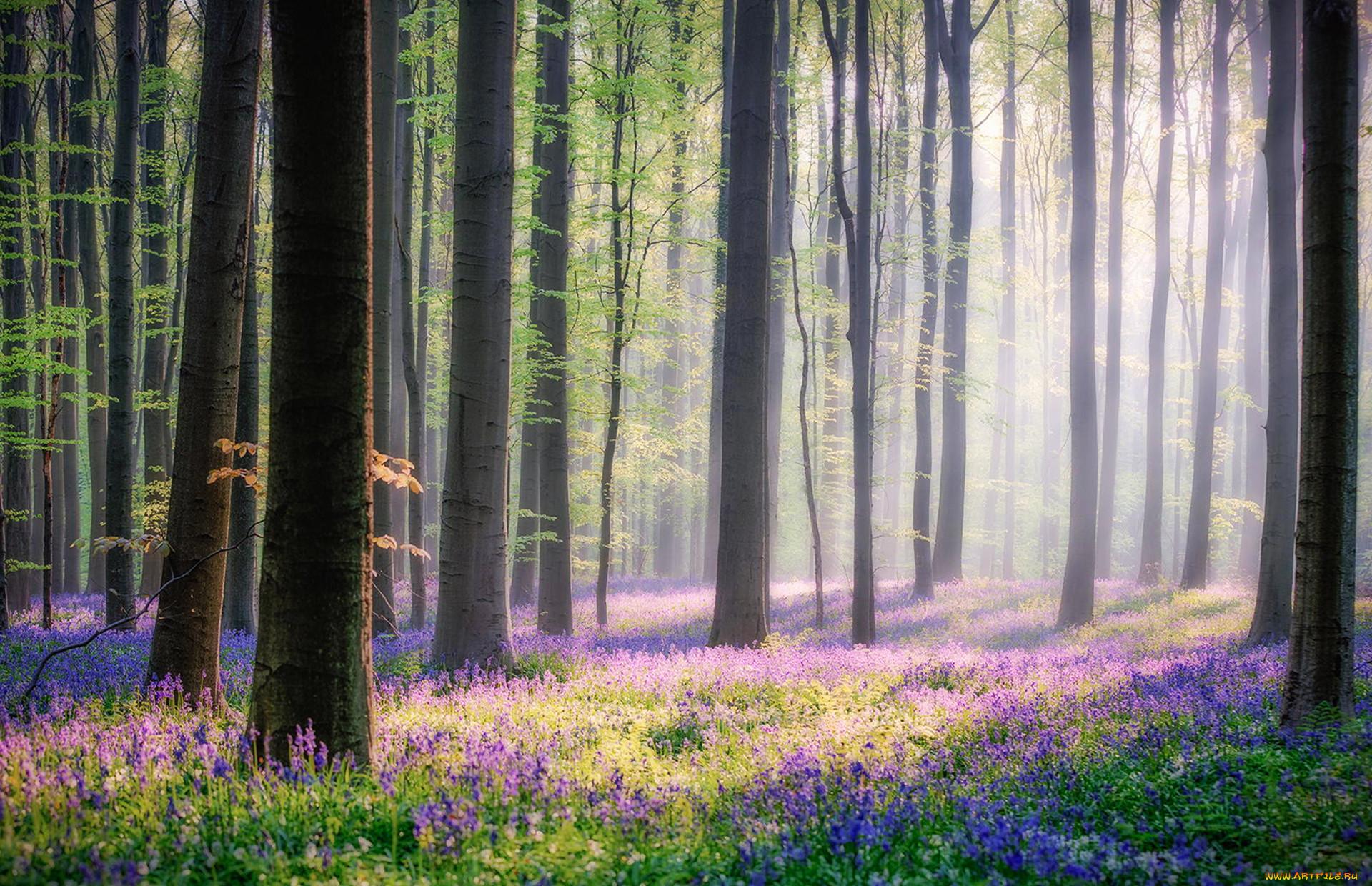 Фотообои утро в весеннем лесу